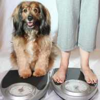 5 Tips to Help Your Pet Lose Weight