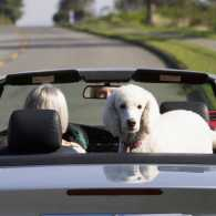 a woman in a car with a dog passenger waves goodbye in the rearview mirror blessing those who move on