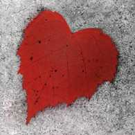 A red leaf in the shape of a heart