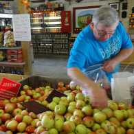 Michelle's husband picking autumn apples