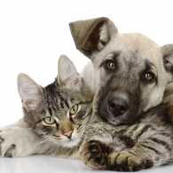 How to care for your pets. Photo by Александр Ермолаев, Thinkstock.
