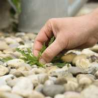 Photo of weeds by Anneke de Blok for Thinkstock, Getty Images