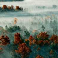 A scenic shot of misty fog and rust-colored trees along Muir's historic path.