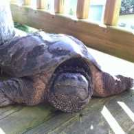 A lost turtle helped home by Mysterious Ways blogger Adam Hunter