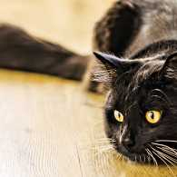 A black cat curls up on a wooden table.