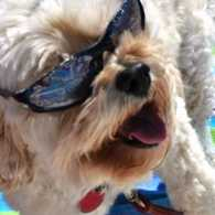 Sunny the dog wearing sunglasses on the beach