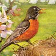 Talk of the Town Cover, a bird on a nest in spring