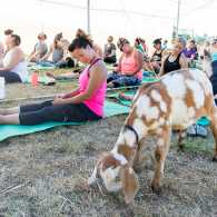Thanks to Lainey Morse, founder of The Original Goat Yoga in Oregon's Willamette Valley, this unusual fitness trend has grown quickly around the country.
