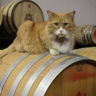 There are many cats mousing and mingling in America's distilleries, breweries, vineyards, bars and pubs