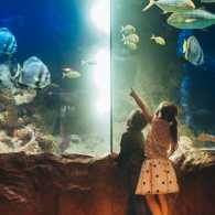 A pair of kids in awe at the sea animals in the aquarium.
