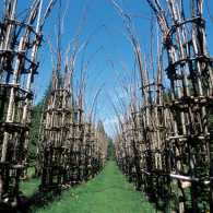 Tree Cathedral Italy, Guideposts