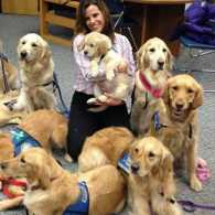 Comfort Dogs Sandy Hook Elementary