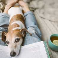 A dog interrupting its owner's reading indoors.