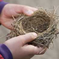two hands hold a small empty bird nest