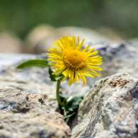 A flower growing through the concrete.