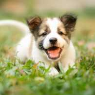 Puppy playing in grass