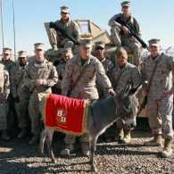 Smoke and the Base Operations Section Marines at Camp al Taqqadum in Iraq