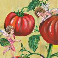 An artist's rendering of cherubs frolicking on a tomato vine