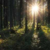 Sunlight illuminates foliage in a dark forest.
