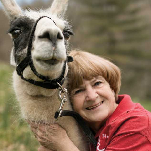 Emily, the Rosses'  first llama, is 23 years old.