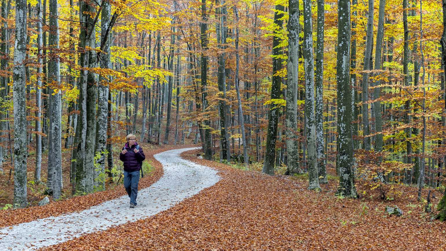 Walking in the fall leaves
