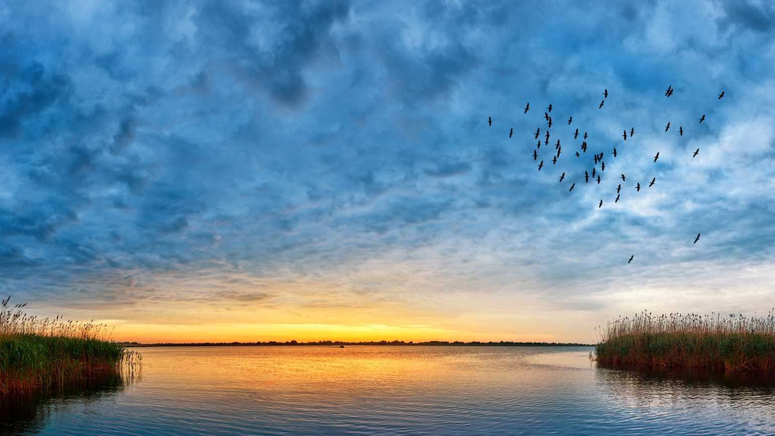 Peaceful sunset landscape over a pond as a flock of birds fly.