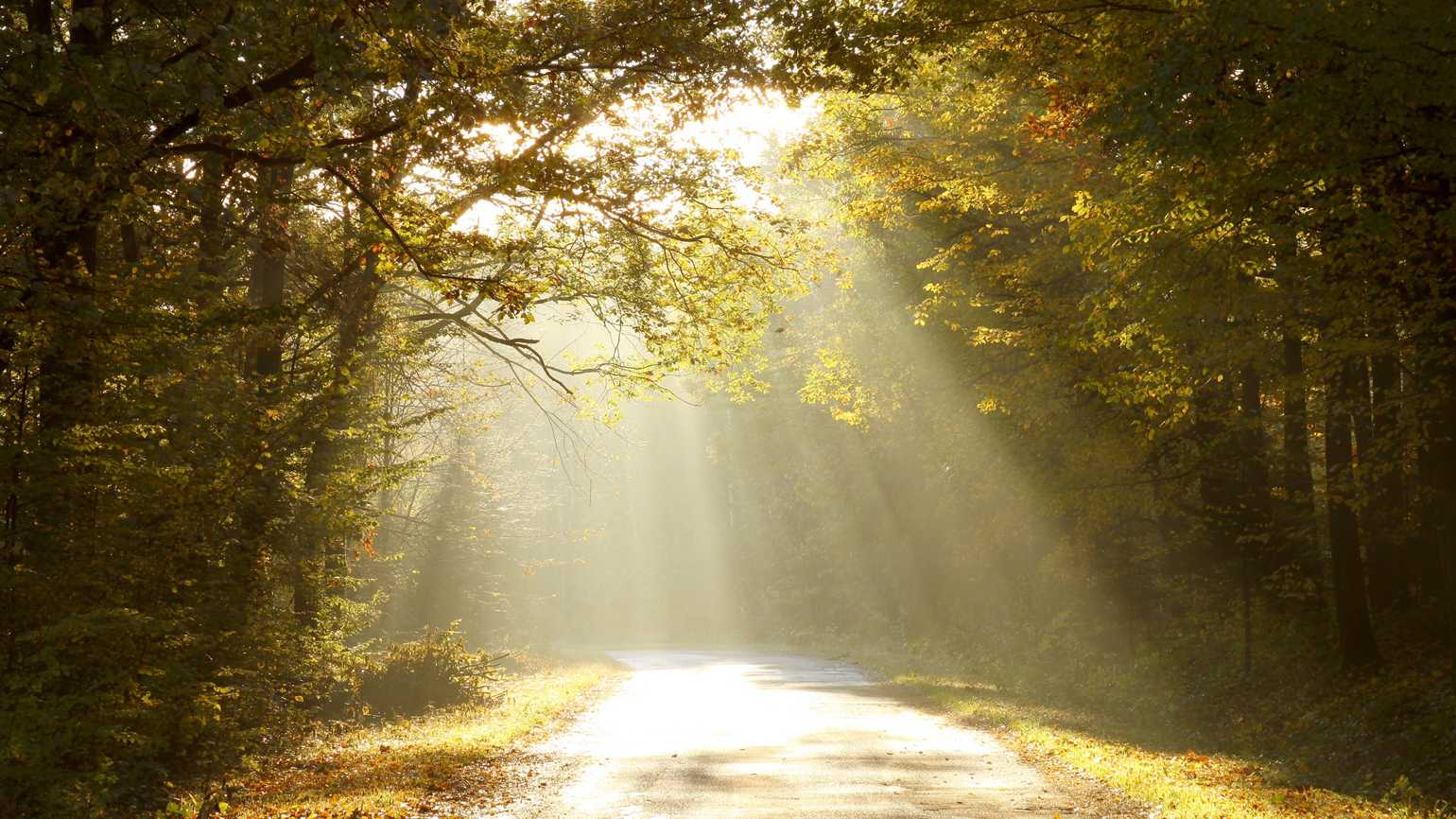 Country road through autumn woods at dawn.