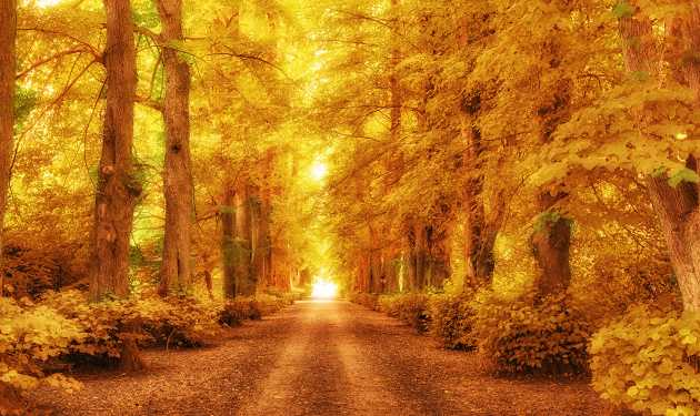 A path through the forest in autumn