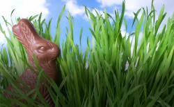 A chocolate bunny in the grass. Thinkstock.