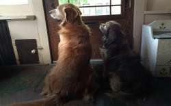 Peggy's dogs waiting by the door. God will always be there for us.
