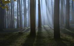 Light in the forest (Thinkstock)
