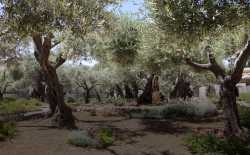Garden of Gethsemane. Photo Thinkstock.