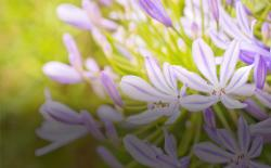 Lilies in a field. Photo: Thinkstock.