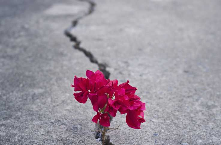 A beautiful red flower blooming through a crack on a street.