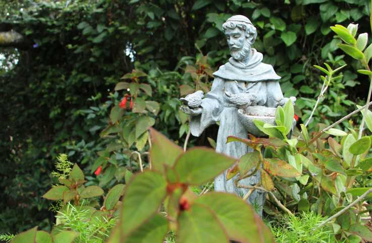 St. Francis of Assissi statue in a flower bed of a garden in Mexico.