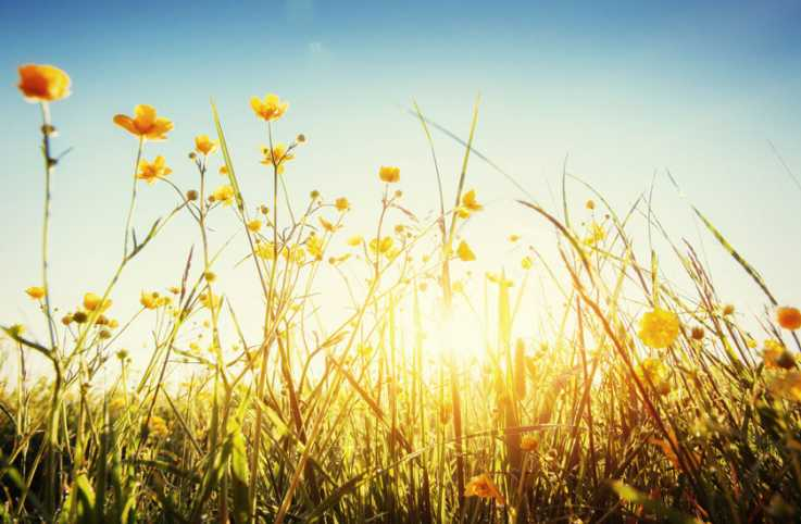 The sun's rays shining down on tall grass and yellow blossoms
