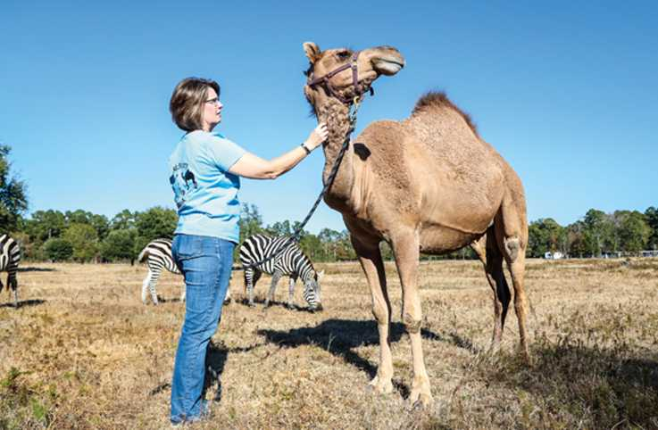 Joanna McMurry with one of her cherished camels, Sybil