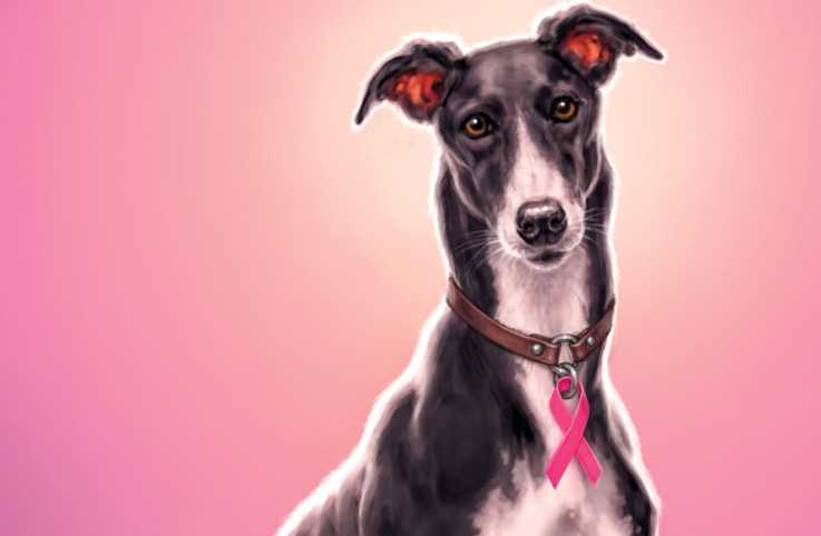 Illustration of Jimmy the greyhound