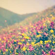 A colorful field of wild flowers