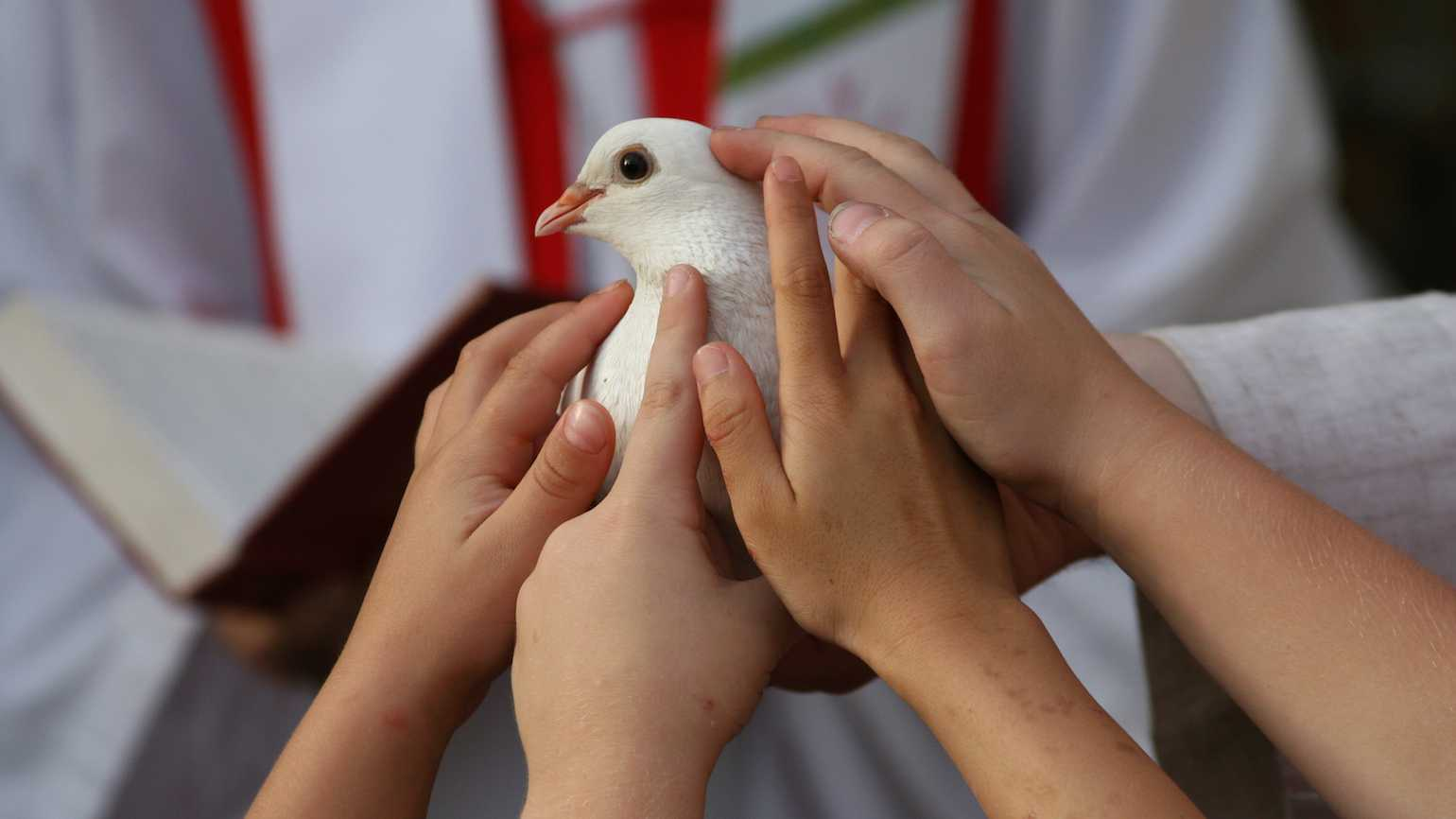 A white dove, the symbol of Pentecost