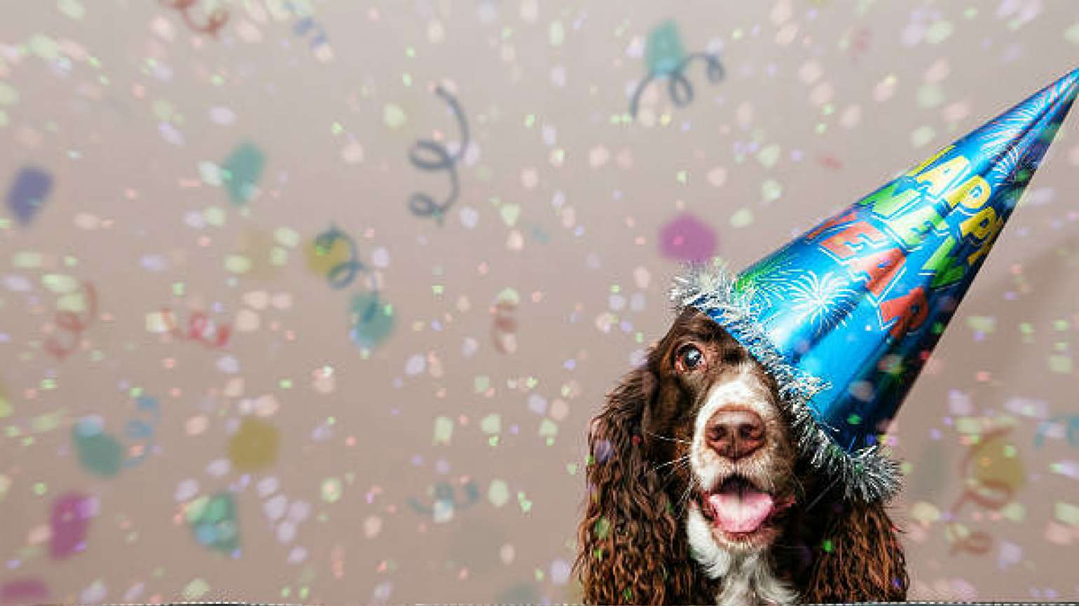 New Year's Resolutions for your dog