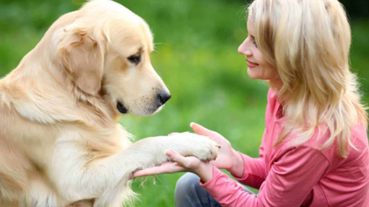 A photo of a golder retriever and a young woman