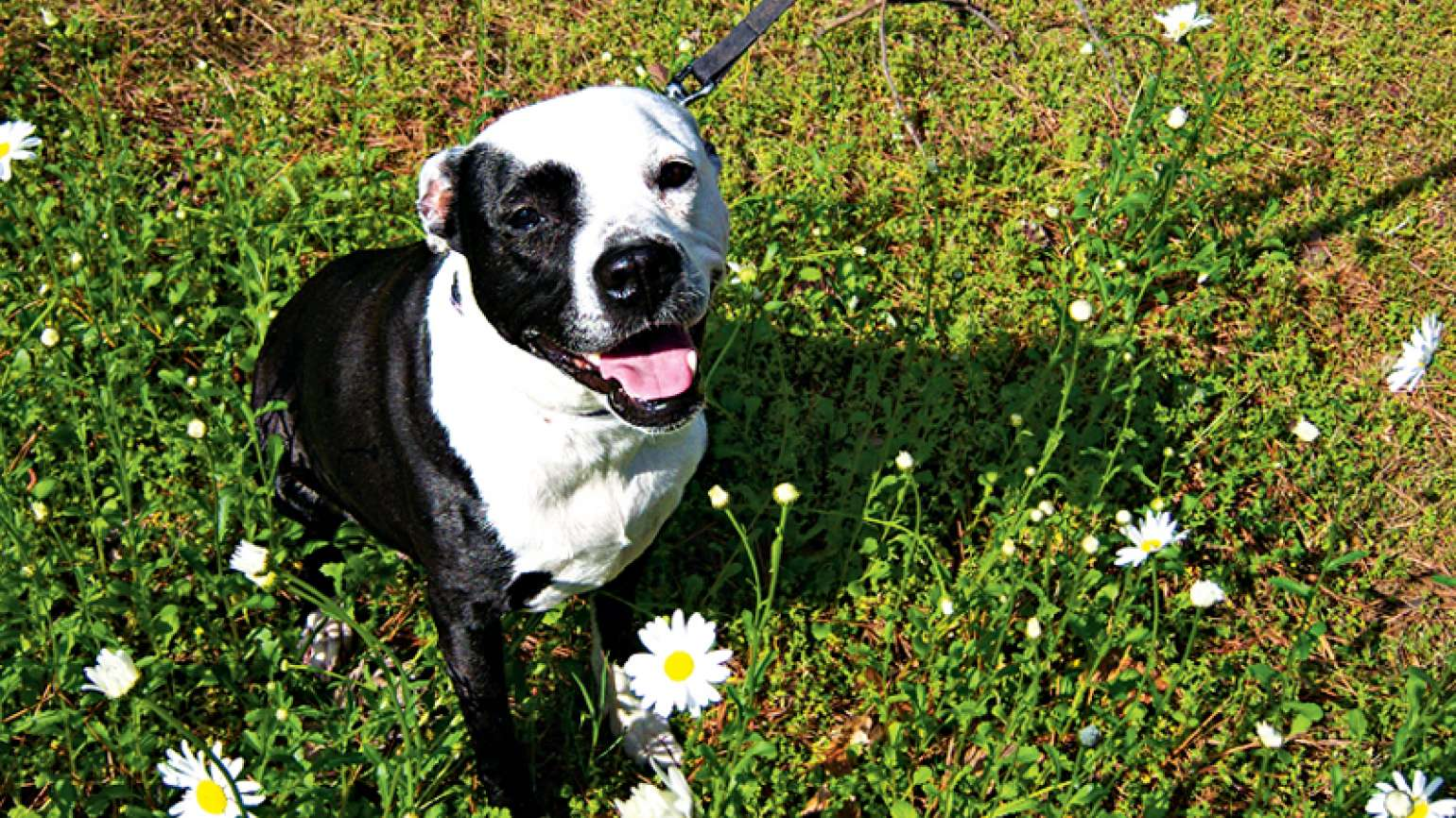 A photo of Daisy the dog in a field of wild flowers
