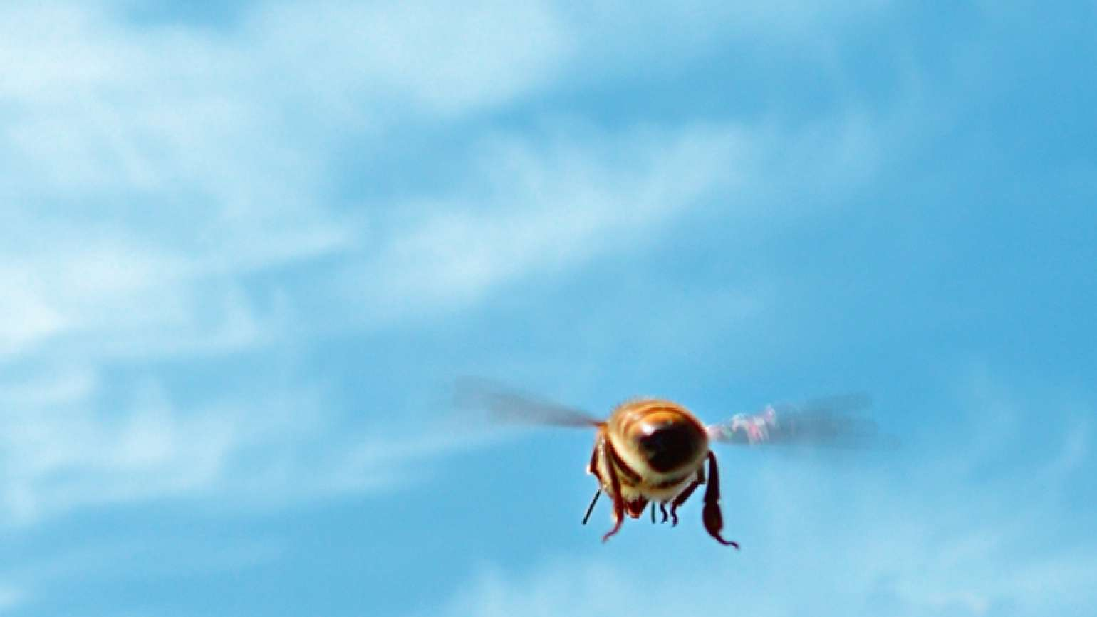 A flying bee against a blue sky streaked with wispy clouds