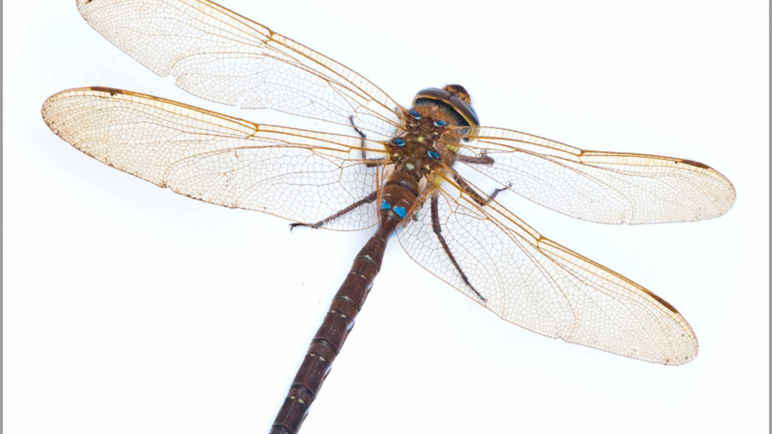 A closeup photo of a dragonfly