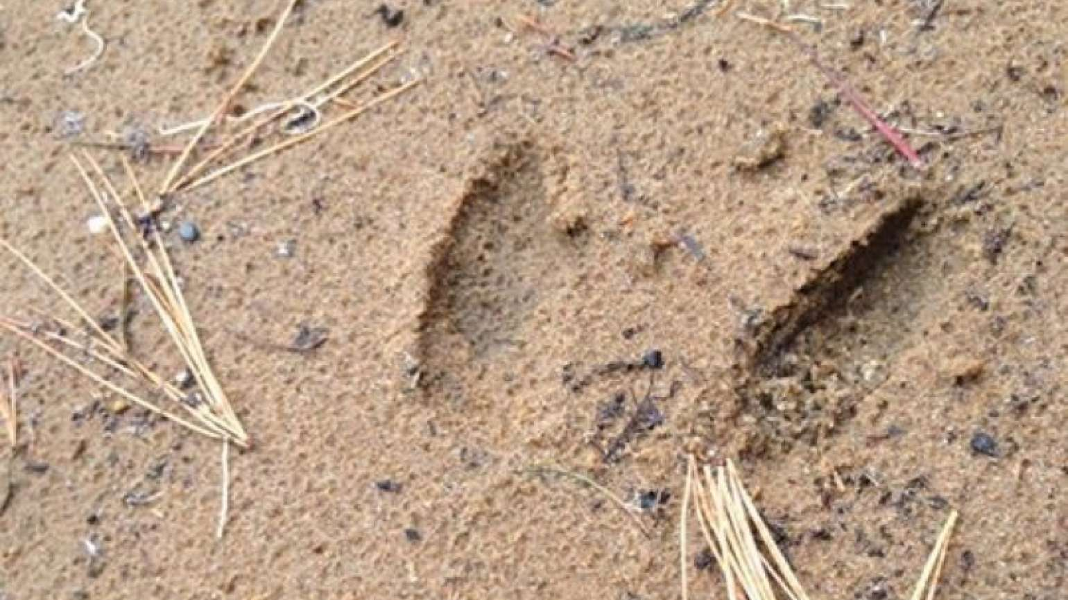 Buck footprint in the sand, submitted by Angels on Earth reader Dawn Guterman