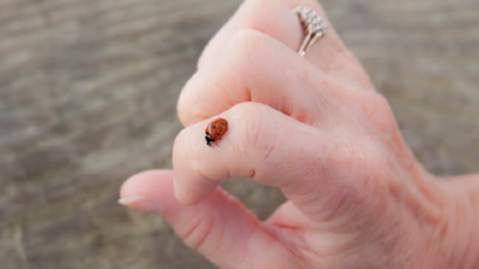 ladybug on a woman's hand