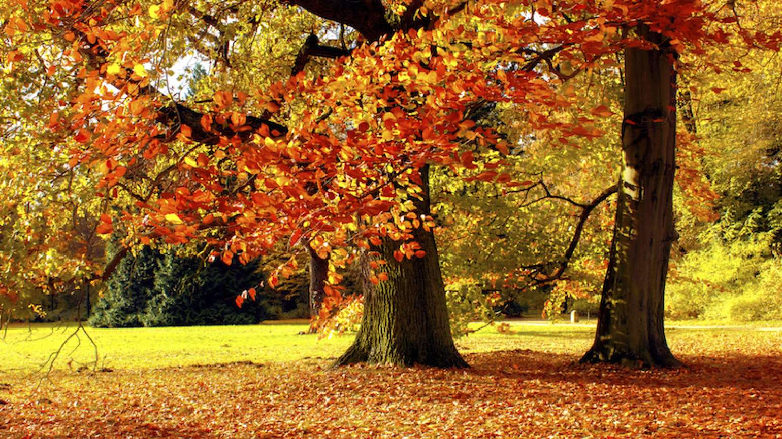 Trees with their autumn leaves