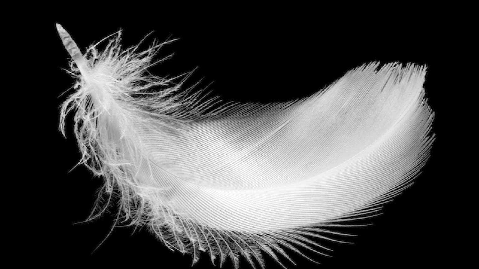 Photo of white feather by Jurisam for Thinkstock, Getty Images