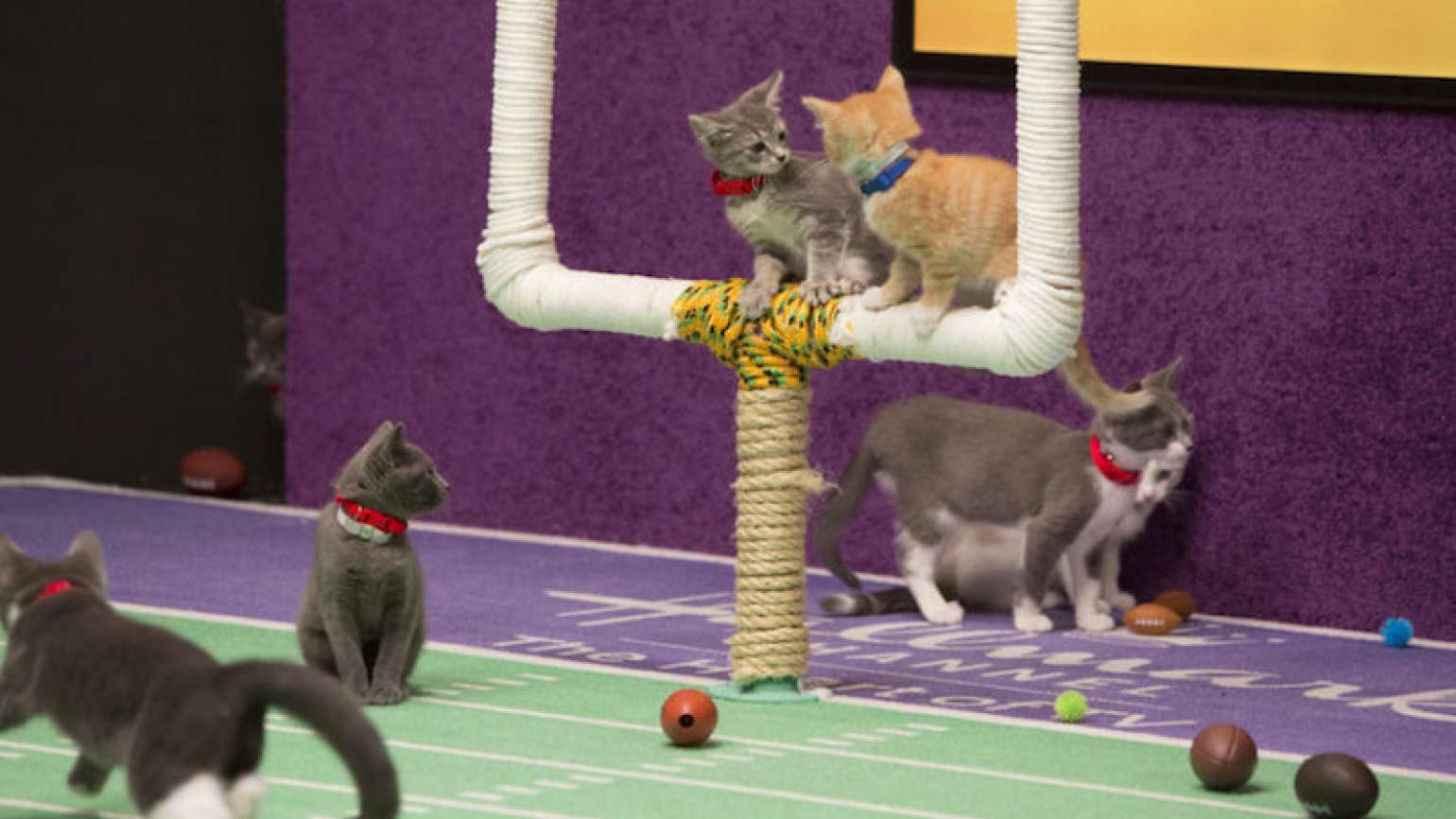 Kittens on the goalpost. Photo Hallmark Channel, Kitten Bowl.